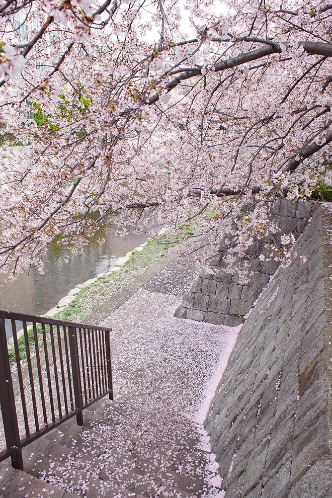 SAKURA_0414-4.jpg