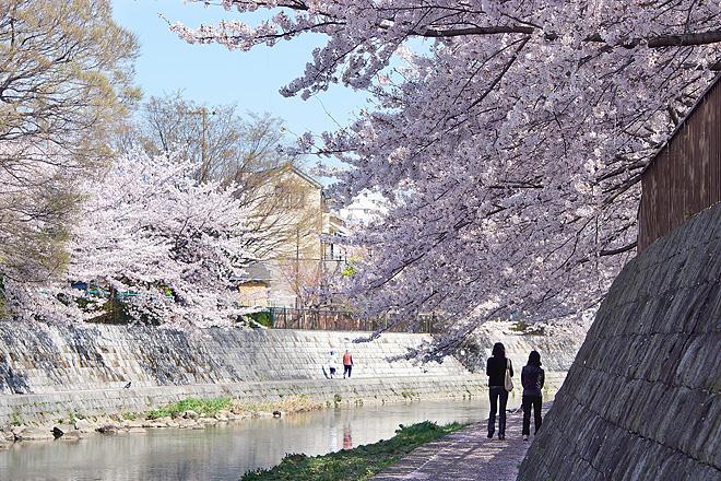 SAKURA_2012-2.jpg