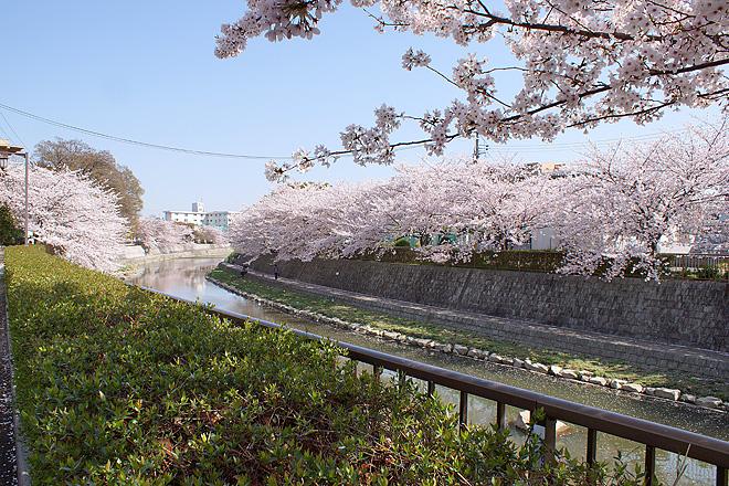 SAKURA_2012-3.jpg