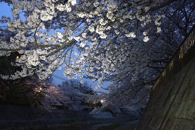 SAKURA_201304-20.jpg
